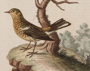 Edwards, 1758
