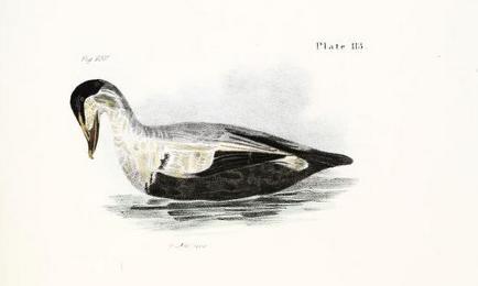 De Kay, Zoology of New York