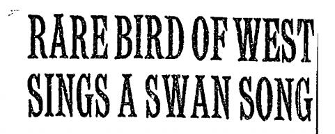 NY Times November 8, 1954
