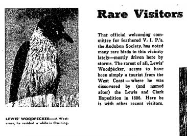 NY Times December 12, 1954