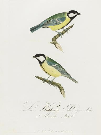 Teutsche ornithologie image 160