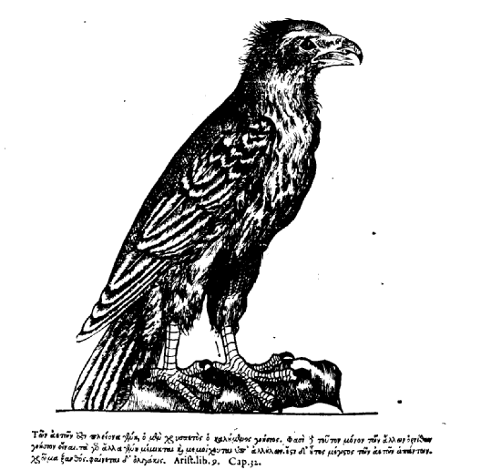 Belon, Book II, aigle