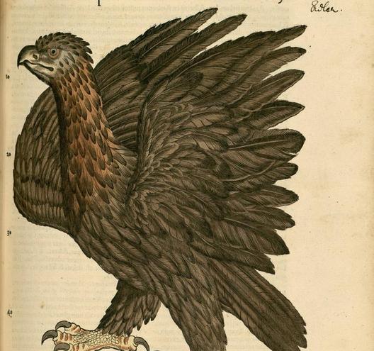 Gesner, eagle, image page 196